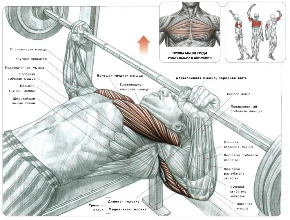 Как правильно делать жим лежа со штангой: техника выполнения упражнения начинающим для увеличения массы и силы грудных мышц