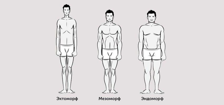 Кто такой эктоморф - характеристика телосложения питание и тренировки